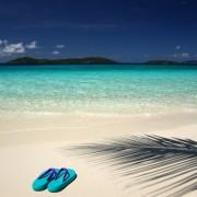 0510ashutterstock_5630872_548_600---Sahilde-bir-cift-deniz-terligi-ve-palmiye-golgesi