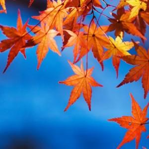 0d9d8shutterstock_226550803---Sonbahar-yapraklari-ve-gokyuzu