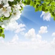 208bashutterstock_99450341---Beyaz-bahar-cicekleri-ve-bulutlu-gokyuzu