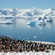 82c3cshutterstock_14745403_800_600---Antarktika-penguen-grubu,-buzdaglari-yansimasi