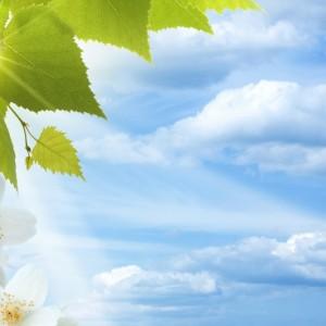 96ed3shutterstock_104297528----Bulutlu-gokyuzu-ve-beyaz-cicekler