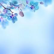 c0fc5shutterstock_167413190---gokyuzu-ve-mavi-cicekler