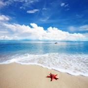 d1b44shutterstock_96289451_600_600---tropikal-ada-ve-kiyiya-vurmus-deniz-yildizi