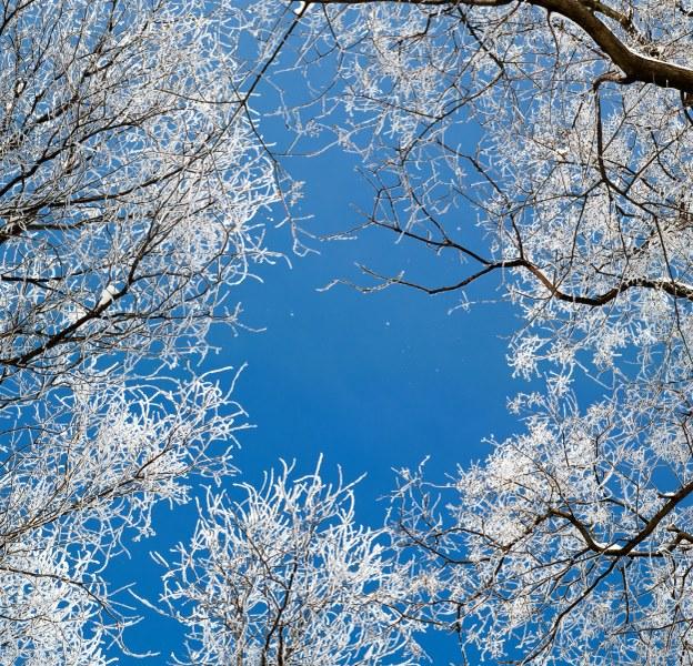 d21c0shutterstock_114416200--gokyuzune-uzanan-beyaz-cicekli-dallar
