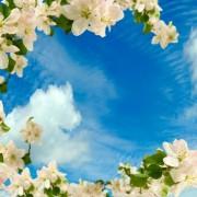 ddbc5shutterstock_191451863--Beyaz-cicekli-dallar-ile-cevrelenmis-gokyuzu