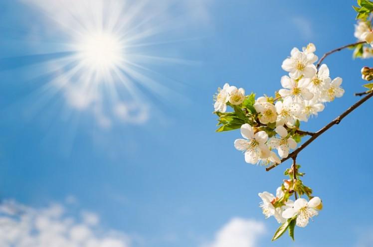 fc4deshutterstock_100602460---parlayan-gunesli-gokyuzu-ve-beyaz-bahar-dali