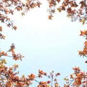 fcc06shutterstock_147864584---Yeni-acan-bahar-cicekleri-ile-cercevelenmis-gokyuzu