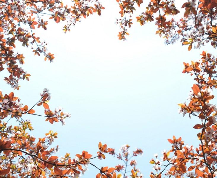 Yeni Açan Bahar çiçekleri Ve Gökyüzü Noa Gergi Tavan Izmir Germe
