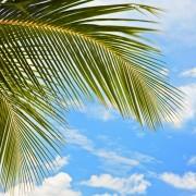 041bdshutterstock_11343046---Berrak-bulutlu-gokyuzune-dogru-uzanmis-palmiye