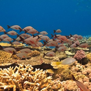0cb72shutterstock_40143397--Balik-ve-mercan.-great-Barrier-Reef-Avustralya