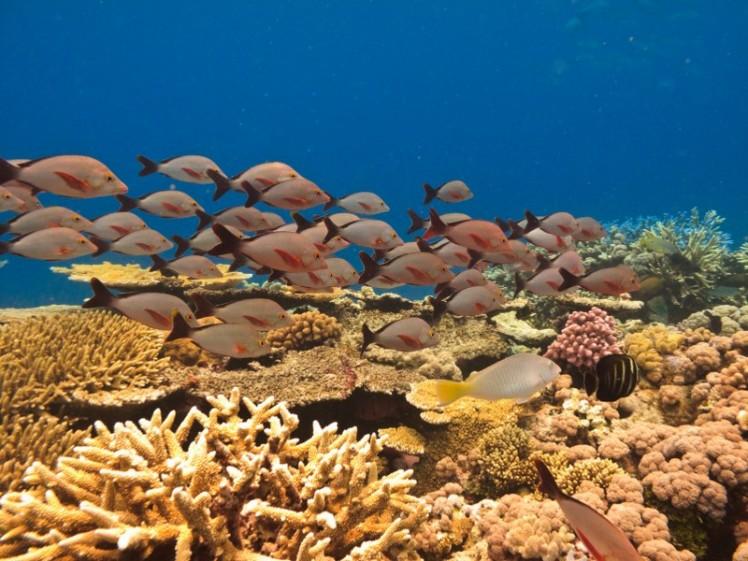 0cb72shutterstock_40143397--Balik-ve-mercan.-great-Barrier-Reef-Avustralya