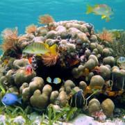 0e687shutterstock_88712773--Renkli-tropikal-baliklar-ve-deniz-solucanlari,-Karayipler,-Kosta-Rika