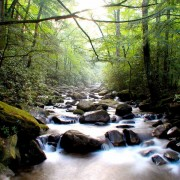 13b5fshutterstock_422524---cam-agaclari-arasinda-akan-nehir