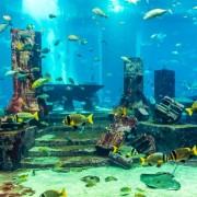 13cd3shutterstock_171928298---Bir-akvaryumda-mercan-kayaligi-uzerinde-tropikal-baliklar