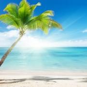 13ee9shutterstock_48509812--Karayip-denizi-ve-hindistan-cevizi-palmiyesi