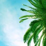 15a71shutterstock_3268207---palmiye-agaci-ve-mavi-gokyuzu
