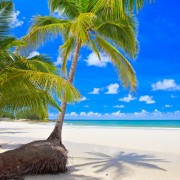 19ca8shutterstock_41563267--Sahilde-cift-palmiye-agaci.-Beyaz-kum,-tropikal-doga,-mavi-gokyuzu