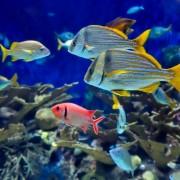 1fb96shutterstock_18725167--mercan-kayaligi-ve-tropikal-baliklarin-sualti-goruntusu