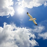 26421shutterstock_139709977--Bulutlar-arasinda-ucan-marti