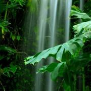 26e0ashutterstock_2589078---yagmur-ormanlarinin-yemyesil-yapraklari-arasinda-akan-selale