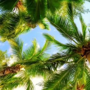 27d8cshutterstock_77269408--mavi-gokyuzu-ve-beyaz-bulutlar-ve-palmiye-agaclari