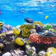 3162cshutterstock_114130168--mercan-ve-baliklar,-Kizildeniz,-Misir