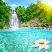 33b7dshutterstock_46132399--selale-havuzunda-lotus-cicegi,-Vietnam