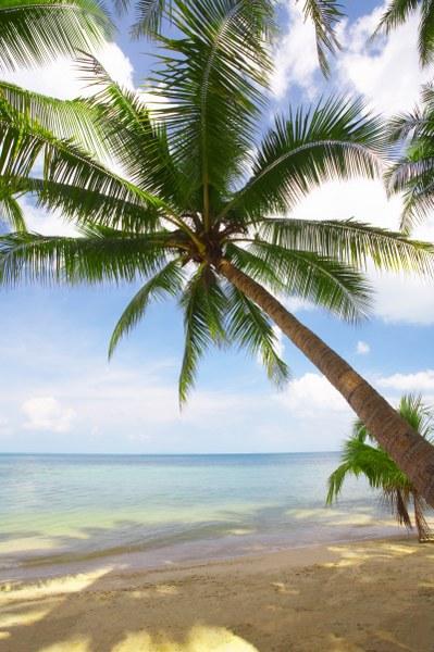 35aadshutterstock_6121897--tropikal-denize-dogru-egilmis-palmiye