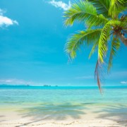 3d270shutterstock_19104013--Berrak-gokyuzu-ve-denize-dogru-egilmis-palmiye