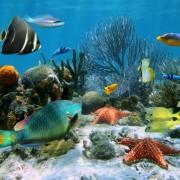44525shutterstock_106945244--Denizyildizi-ve-renkli-tropikal-baliklar,-Karayip-denizi