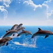 48edbshutterstock_220079902---Ziplayan-Yunuslar,-mavi-deniz-ve-gokyuzu,-beyaz-bulutlar