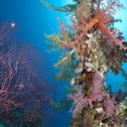 59ff4shutterstock_62618179--Renkli-ve-canli-tropikal-resif-sahne.-Ras-ghozalni,-Sharm-el-Sheikh,-Kizildeniz,-Misir