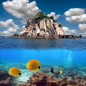 644c1shutterstock_61471849--Bir-resif-ust,-Koh-tao-adasi,-tayland