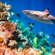 6f7f0shutterstock_203344603---Sert-ve-yumusak-mercanlar-ve-tropikal-baliklar,-Maldivler