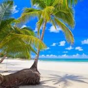 76813shutterstock_76847725--Mavi-gokyuzunun-altinda-beyaz-kum-uzerinde-yesil-palmiye-agaclari--tropikal-plaj