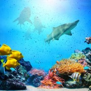 8621bshutterstock_135724787---Mercan-resif,-renkli-balik-gruplari,-kopekbaliklari-ve-temiz-okyanus