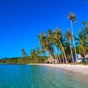 88fe4shutterstock_43417693--Hindistan-cevizi,-palmiye-agaclari-ve-turkuaz-okyanus