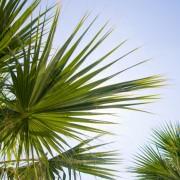 91063shutterstock_162778280--Mavi-gokyuzu-ve-palmiye-dallari