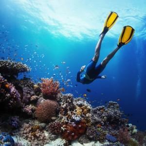 942eashutterstock_141494944---Canli-mercan-resif-uzerinde-serbest-dalici