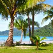 9472dshutterstock_76811545--tropikal-yaz-sahilde-denize-yakin-yesil-cimenlerin-uzerinde-palmiye-agaclari
