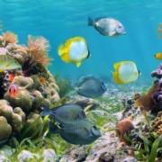 964e1shutterstock_97186160---Renkli-tropikal-baliklar,-Sualti-panorama