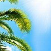 9a244shutterstock_48918133--palmiye-dallari-ve-gokyuzu