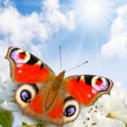 9b9afshutterstock_96841591--ilkbaharda-yeni-acan-cicekler-ustunde-kelebek-ve-gunesli-gokyuzu