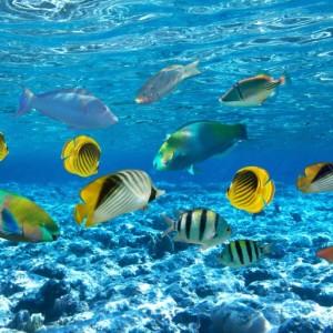 9ec37shutterstock_77255296--Bir-mercan-kayaligi-uzerinde--tropik-baliklar