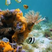 a03d0shutterstock_93137476--Bir-tur-solucan,-renkli-sungerler-ve-baliklar,-Karayip