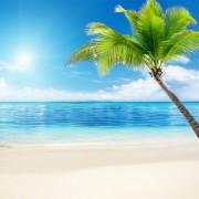 a44b1shutterstock_63268249--Sahil-ve-palmiye