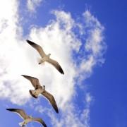 a7079shutterstock_141383656--Bulutlar-arasinda-marti-grubu
