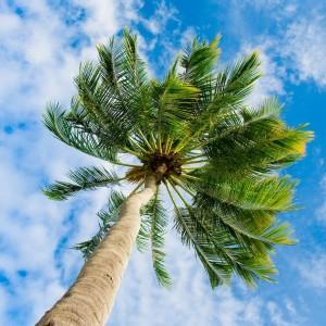 a904bshutterstock_57749173--Bulutlu-gokyuzune-uzanan-palmiye