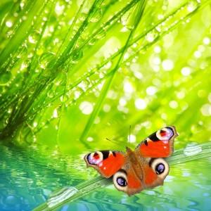 aaf0dshutterstock_96571846--nemli-cimler-arasinda-kelebek