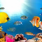 ba0c1shutterstock_69682795--Kizil-denizde-sert-mercan-kayaligi